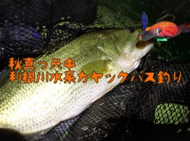 【釣行】トップと巻物で攻める秋の利根川水系カヤック朝練